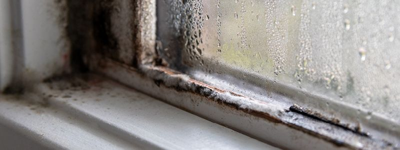 close up of window corner with mold growth and excessive condensation